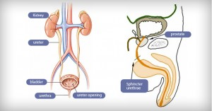 urology-and-surgery